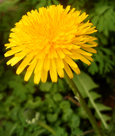 5 eco friendly solutions to kill weeds better housekeeper 5 eco friendly solutions to kill weeds mightylinksfo