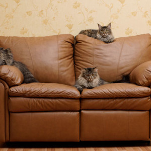 cats-on-couch