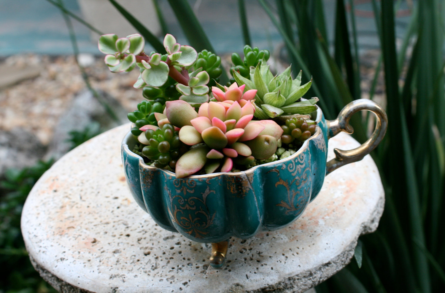 everything you need to know about succulents care watering potting soil teacup sunlight gardening