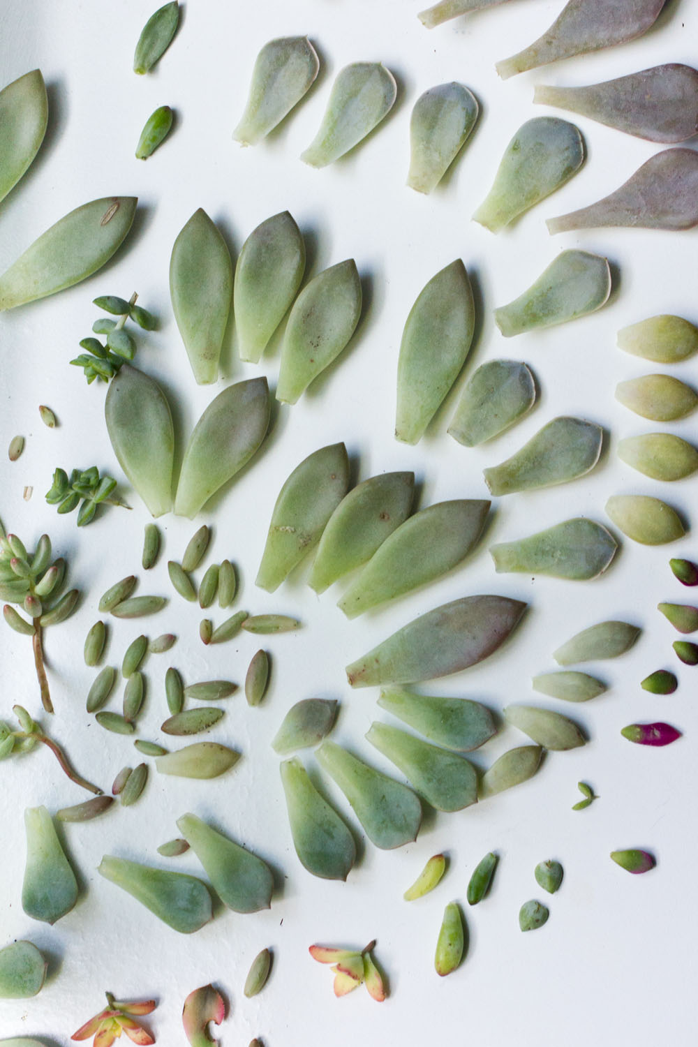 everything you need to know about succulents propogating leaves care watering potting soil sunlight