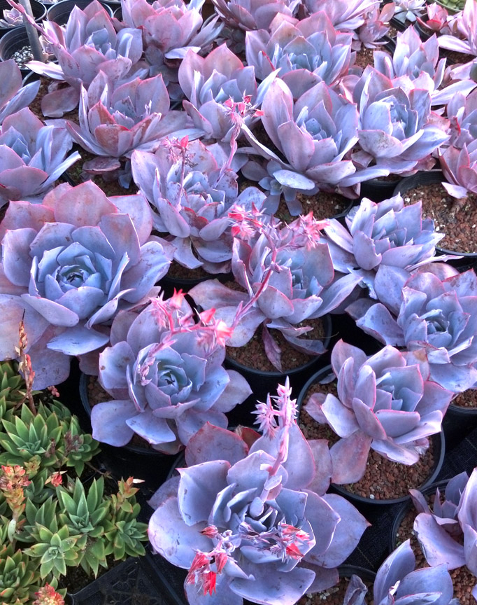 everything you need to know about succulents watering care potting soil light decorating plants gardening