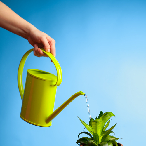 Don T Toss It Yet Here S How To Revive A Dead Plant Back