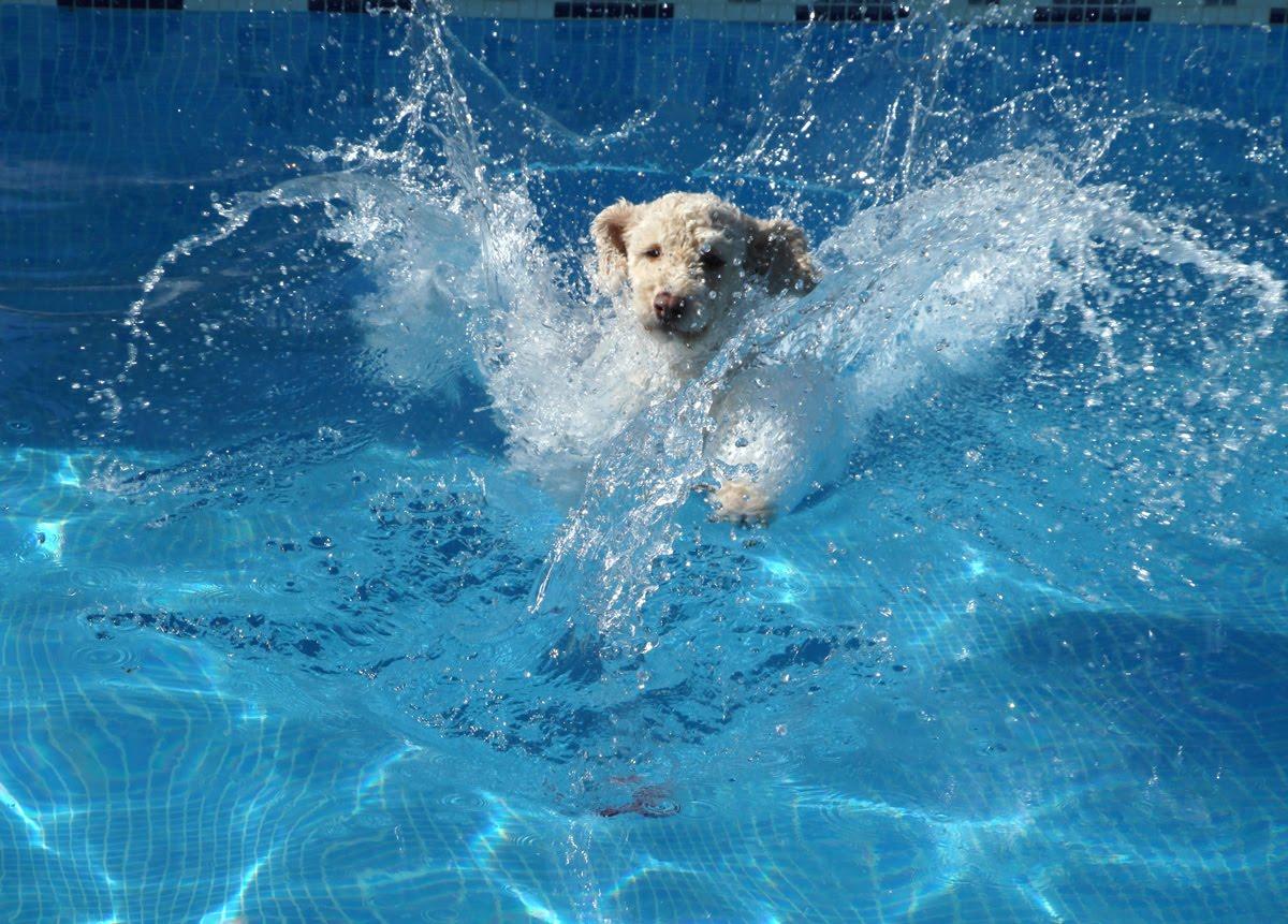 backyard pet dangers pool plants poison6