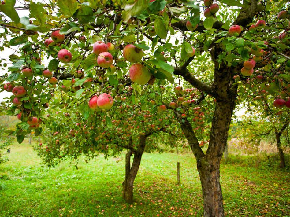 backyard pet hazards pools fruit trees slug bait plants 3