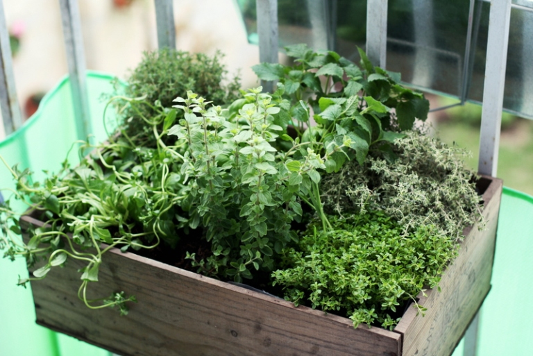 grow your own soup garden herbs balcony patio backyard tomatoes potatoes carrots kale