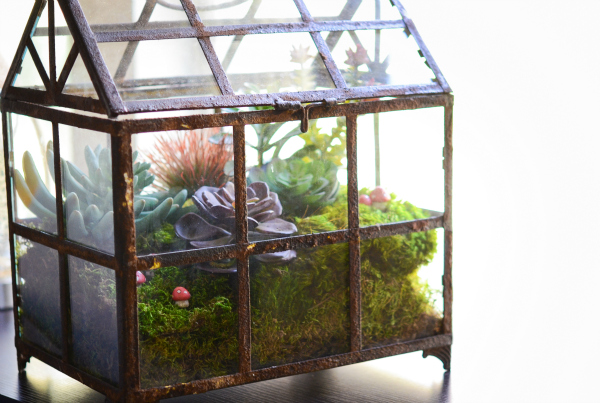 How to Make a Terrarium - Take a Look at these 10 Adorable Ideas diy moss mushrooms gnomes succulents easy diy cute indoor garden container4