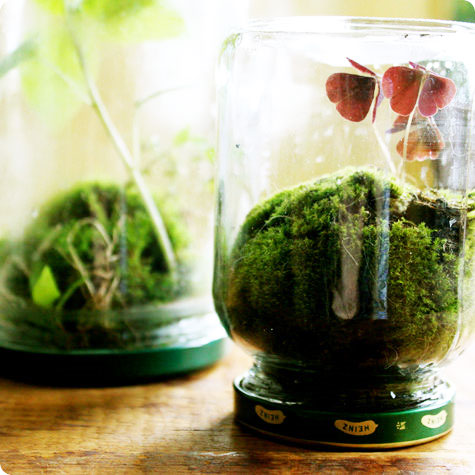 How to Make a Terrarium - Take a Look at these 10 Adorable Ideas diy moss mushrooms gnomes succulents easy diy cute indoor garden container5