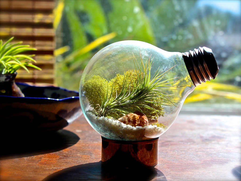 how to make a terrarium take a look at these 7 adorable ideas better housekeeper. Black Bedroom Furniture Sets. Home Design Ideas