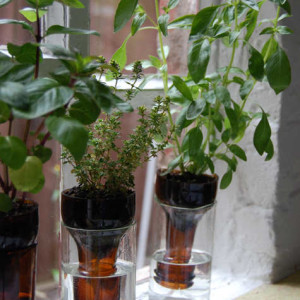 Never Forget to Water Your Plants Again- Self-Watering Planters bottle gardens beer bottles herbs easy no watering diy simple1