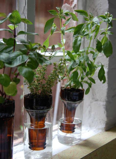 Never Forget to Water Your Plants Again- Self-Watering Planters bottle gardens beer bottles herbs easy no watering diy simple1