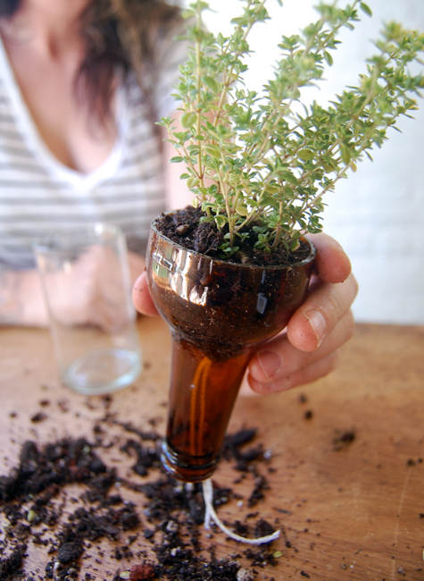Never Forget to Water Your Plants Again- Self-Watering Planters bottle gardens beer bottles herbs easy no watering diy simple7