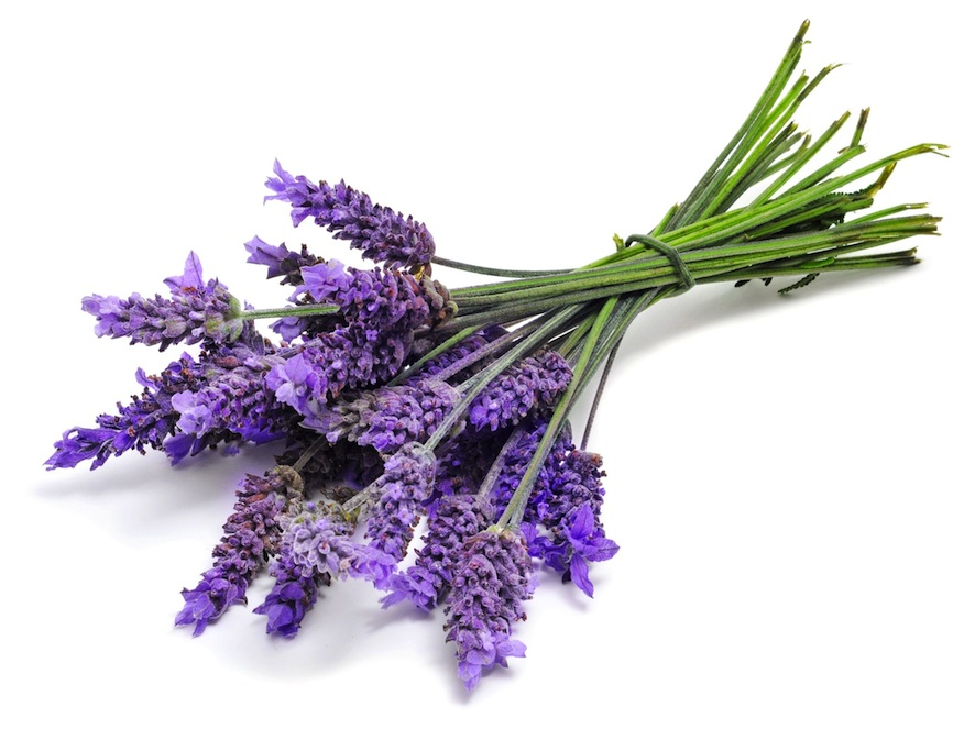 10 Ways to Use Lavender - From Baking to Relieving Headaches1