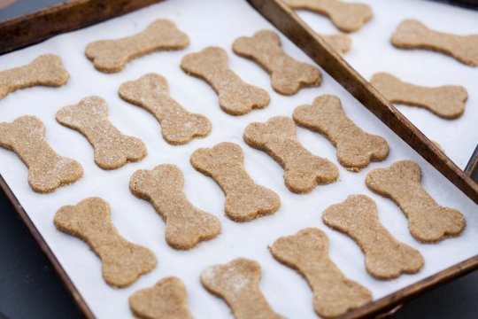 How To Make Homemade Bacon Fat Dog Treats Better Housekeeper