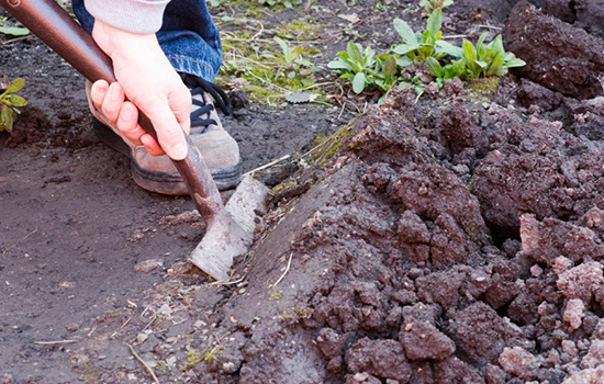 It's Time to Prep Your Garden for Next Year - Here's How soil soil testing spade weeds organic matter3