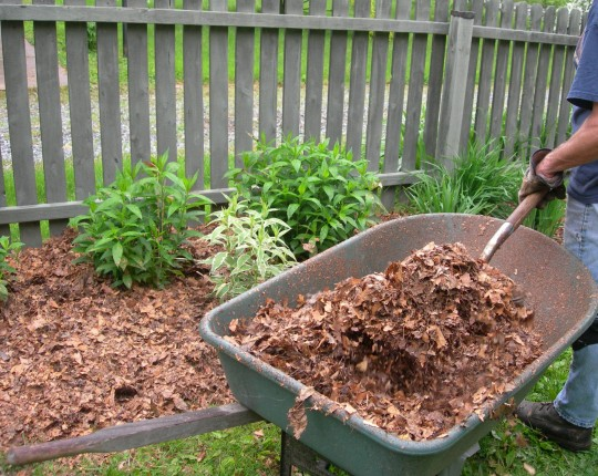 6 Useful Ways to Use Dried Up Fall Leaves kindling crafts mulch fertilizer lawn plants gardening compost3