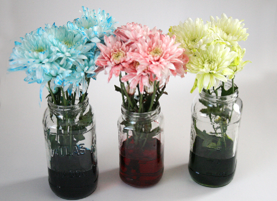 how to make flowers change color using food coloring