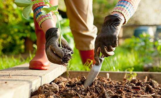 Get Your Veggie Garden Started! Here's What You Can Plant in March!peas beetroot kale parsnips carrots spinach herbs1