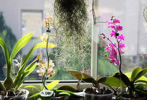 Spring Cleaning 101: Clean Your Houseplants from Dust and Bugs!1