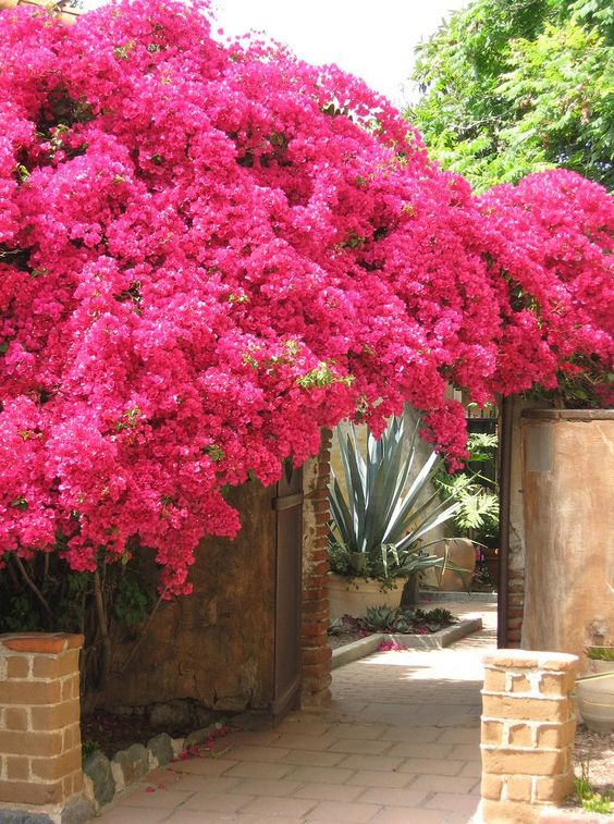 pink tree landscaping ideas