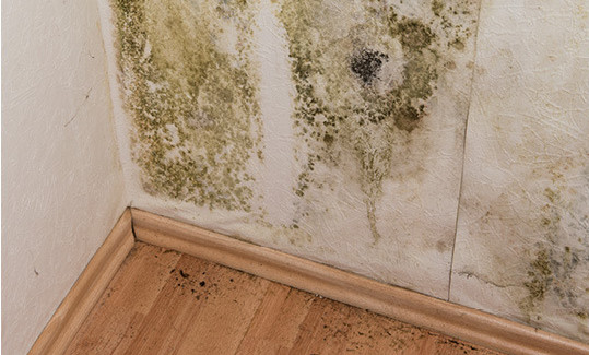 mold-growing-how-to-get-rid-of-it