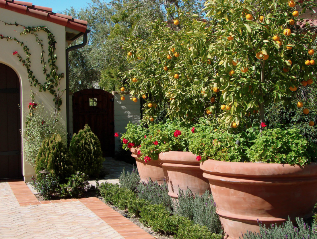 Get Ready for Spring! Tips for Growing a Lemon Tree | Better HouseKeeper
