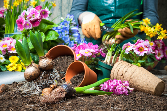 gardening ideas creating a picture perfect garden