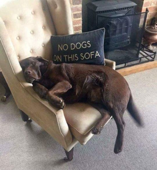 pets on furniture