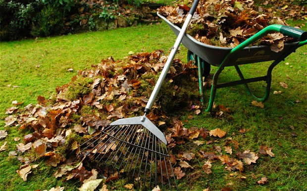 cleaning leaves rental
