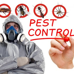 how to remove pests in the summer