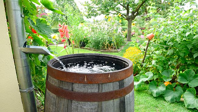 Hordó az eresz alatt. Olcsó megoldás a víz gyűjtésére.