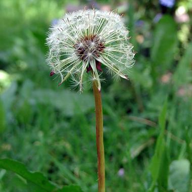 Listen-Weeds-Weeds