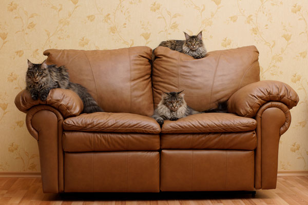5 Tips For Getting Rid Of Pet Hair In Your Home Better