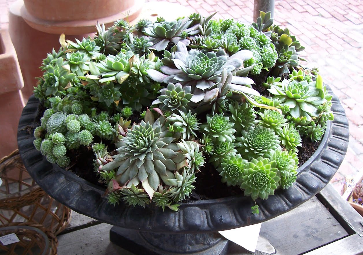 Everything you need to know about succulents better for Everything about soil