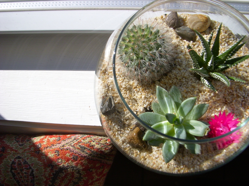 How to Make a Terrarium - Take a Look at these 10 Adorable Ideas diy moss mushrooms gnomes succulents easy diy cute indoor garden container12