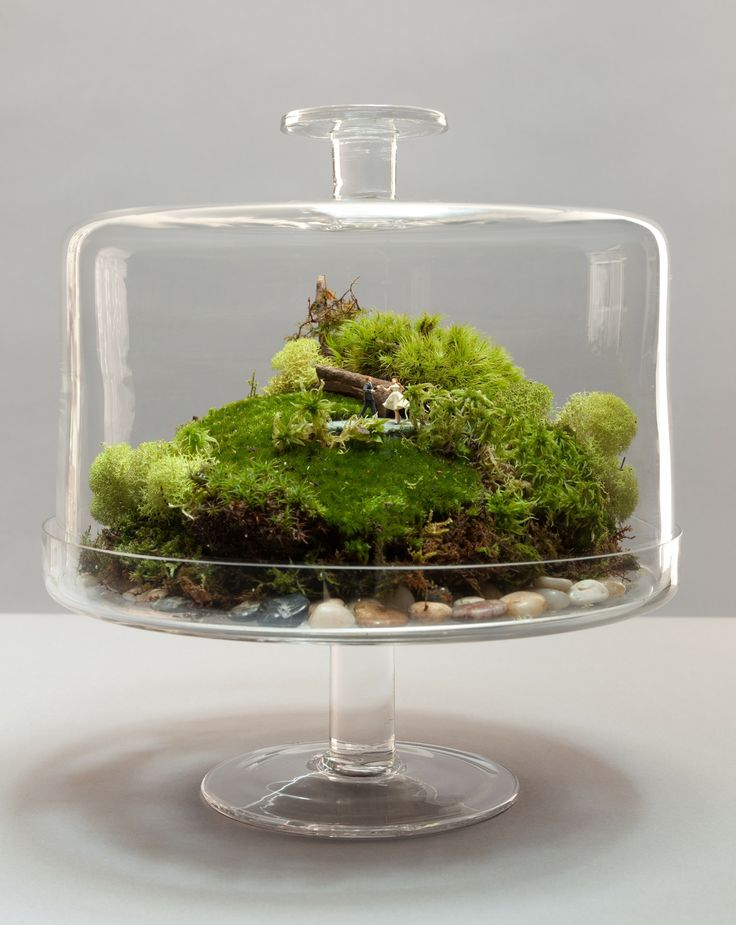 How to Make a Terrarium - Take a Look at these 10 Adorable Ideas diy moss mushrooms gnomes succulents easy diy cute indoor garden container9