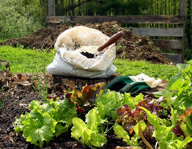 How to Start Start Composting in Your Garden food scraps nutrients gardening1