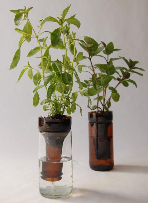 Never Forget to Water Your Plants Again- Self-Watering Planters bottle gardens beer bottles herbs easy no watering diy simple8