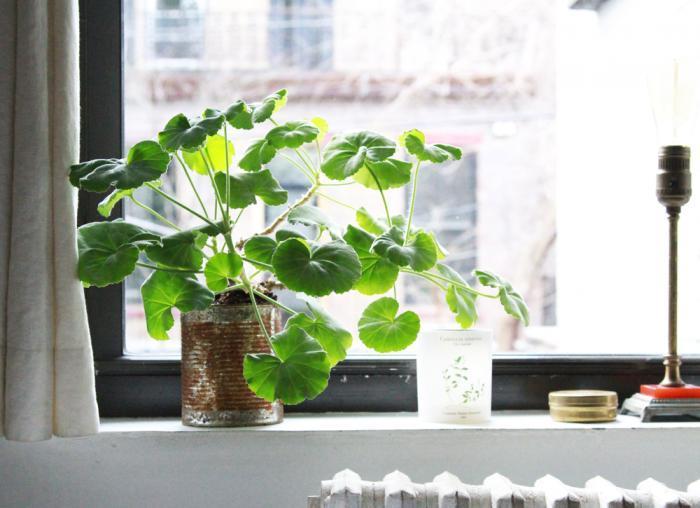 The SECRET to Getting Your Windows Sparkling Like Diamonds! vinegar cornstarch lemon water6