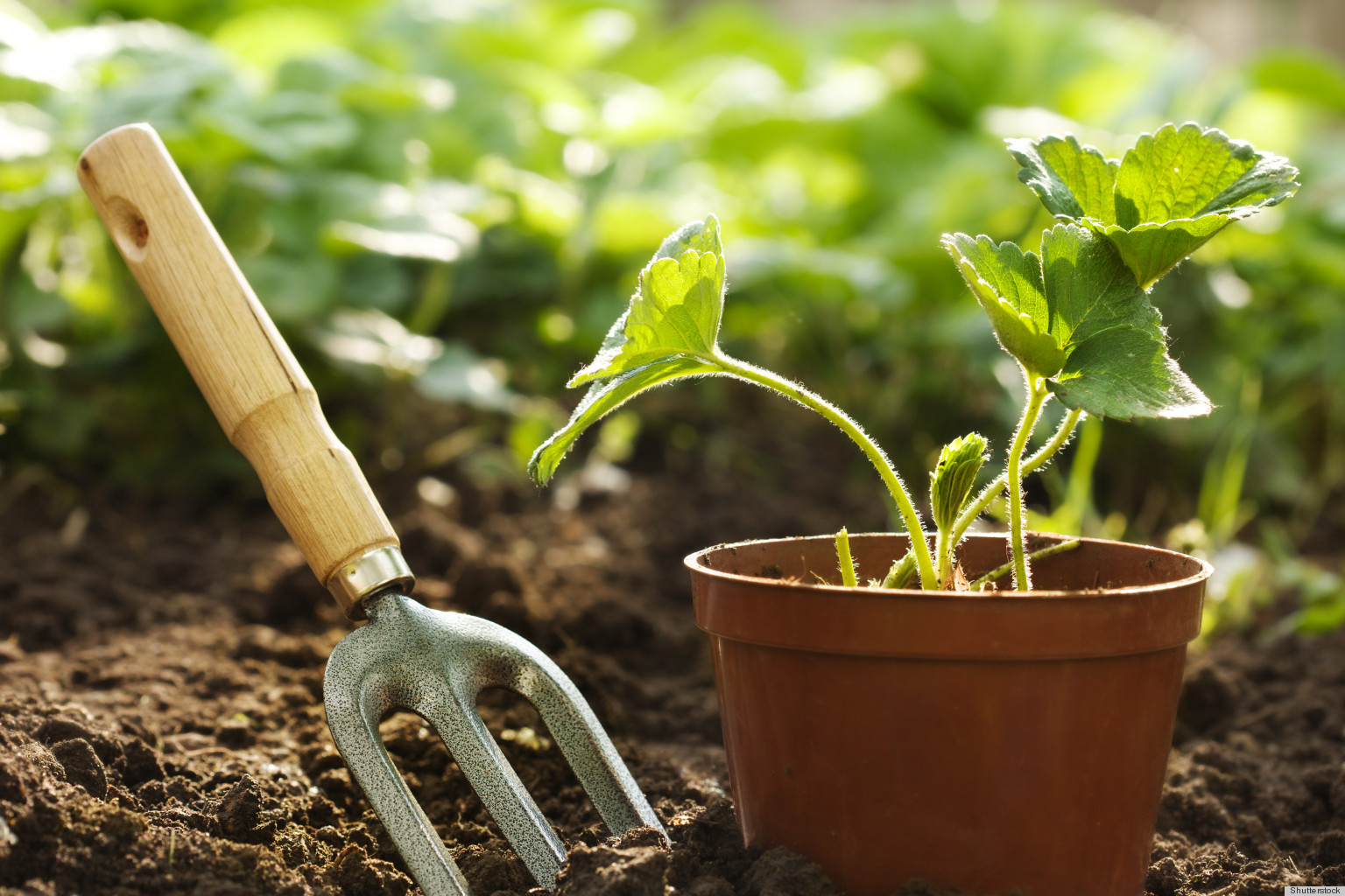 10 Different Ways You Can Use Coffee Grounds in Your Home, From Fertilizing Your Garden to Deodorizing Your Fridge!5