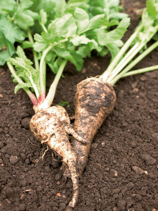Get Your Veggie Garden Started! Here's What You Can Plant in March!peas beetroot kale parsnips carrots spinach herbs6