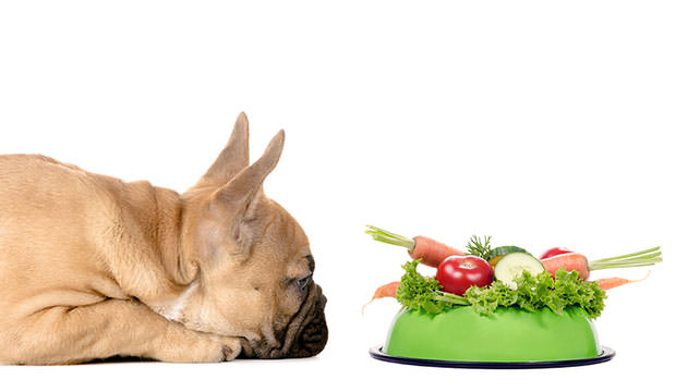 healthy-allergy-dog-food