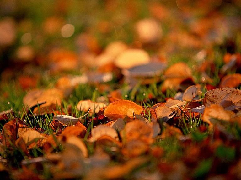 how-to-reuse-fallen-leaves-in-your-yard