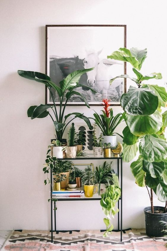 decorating with potted plants bring the outdoors in