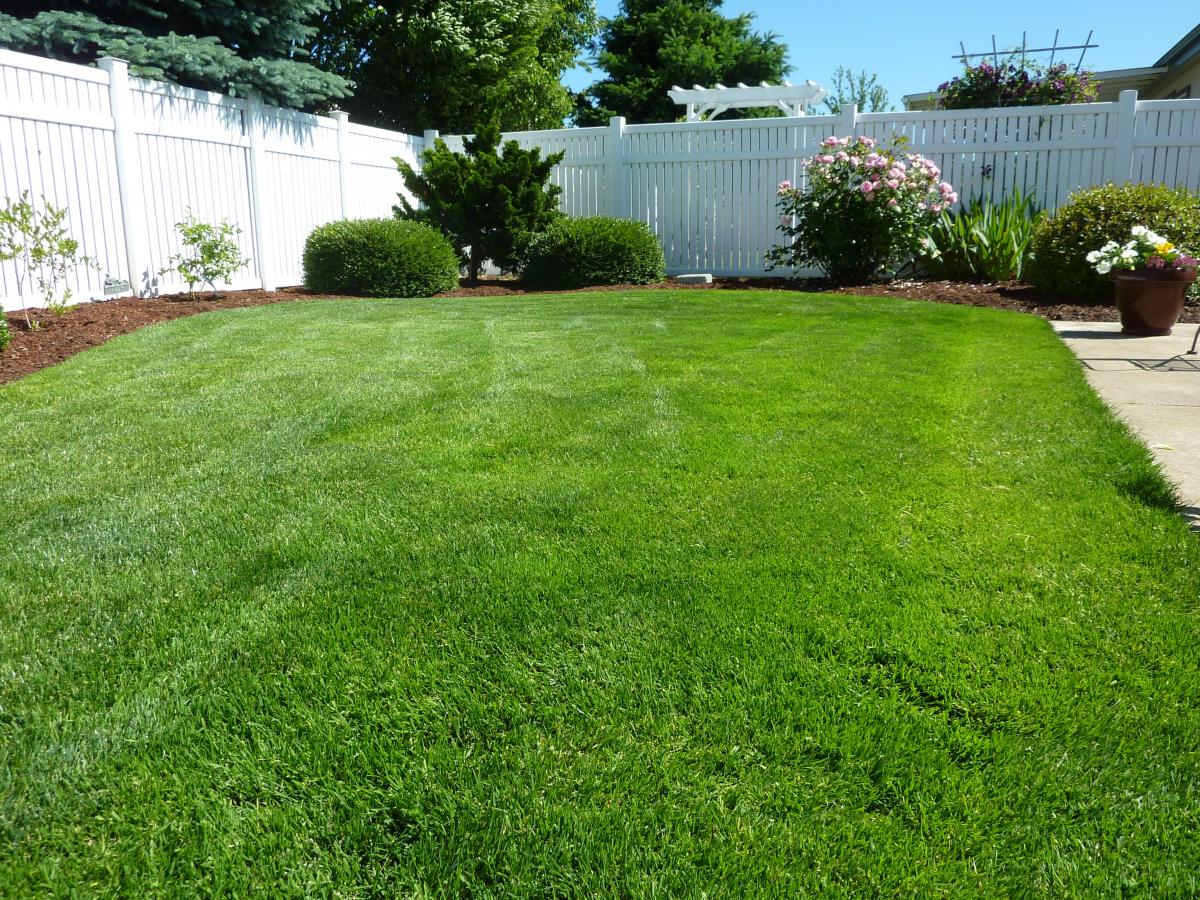 green grass lawn care backyard how to keep green