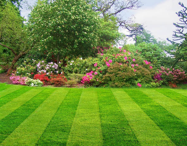 lawn care ideas how to