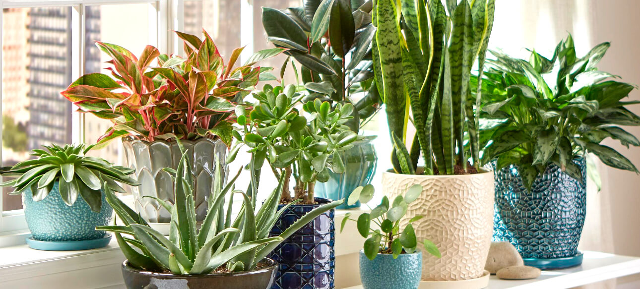 Indoor Plants That Are Safe For You And Your Pets Better Housekeeper